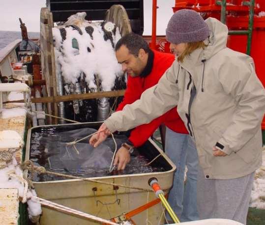 Incubaciones en la antartica