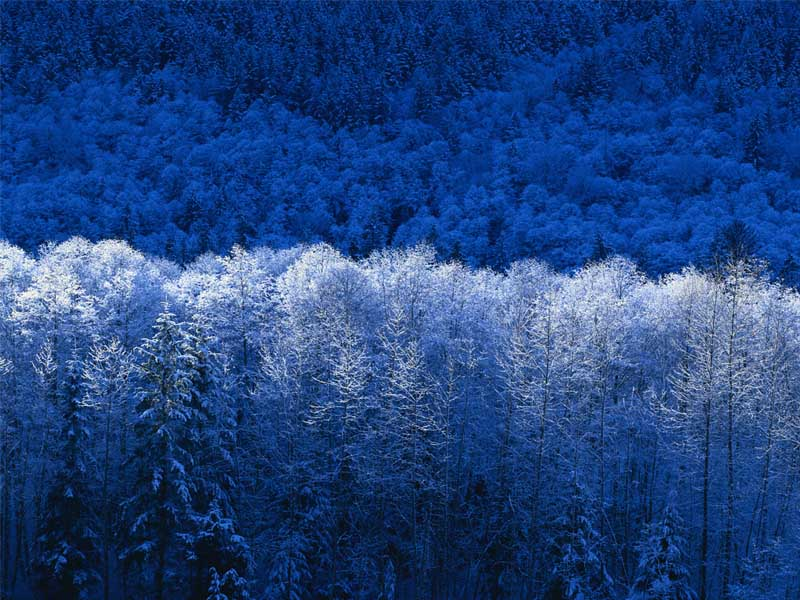 foto de invierno